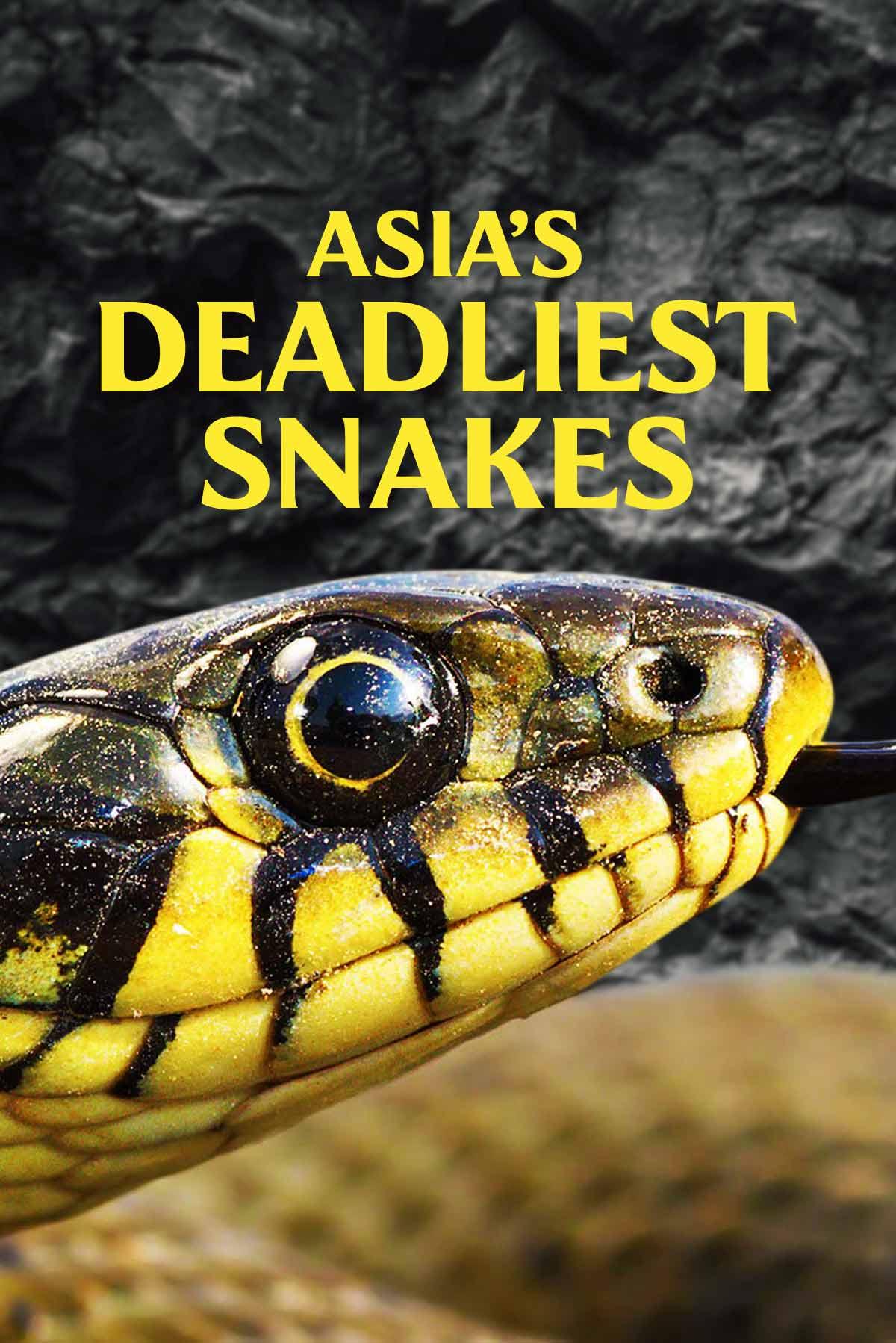 Asia's Deadliest Snakes