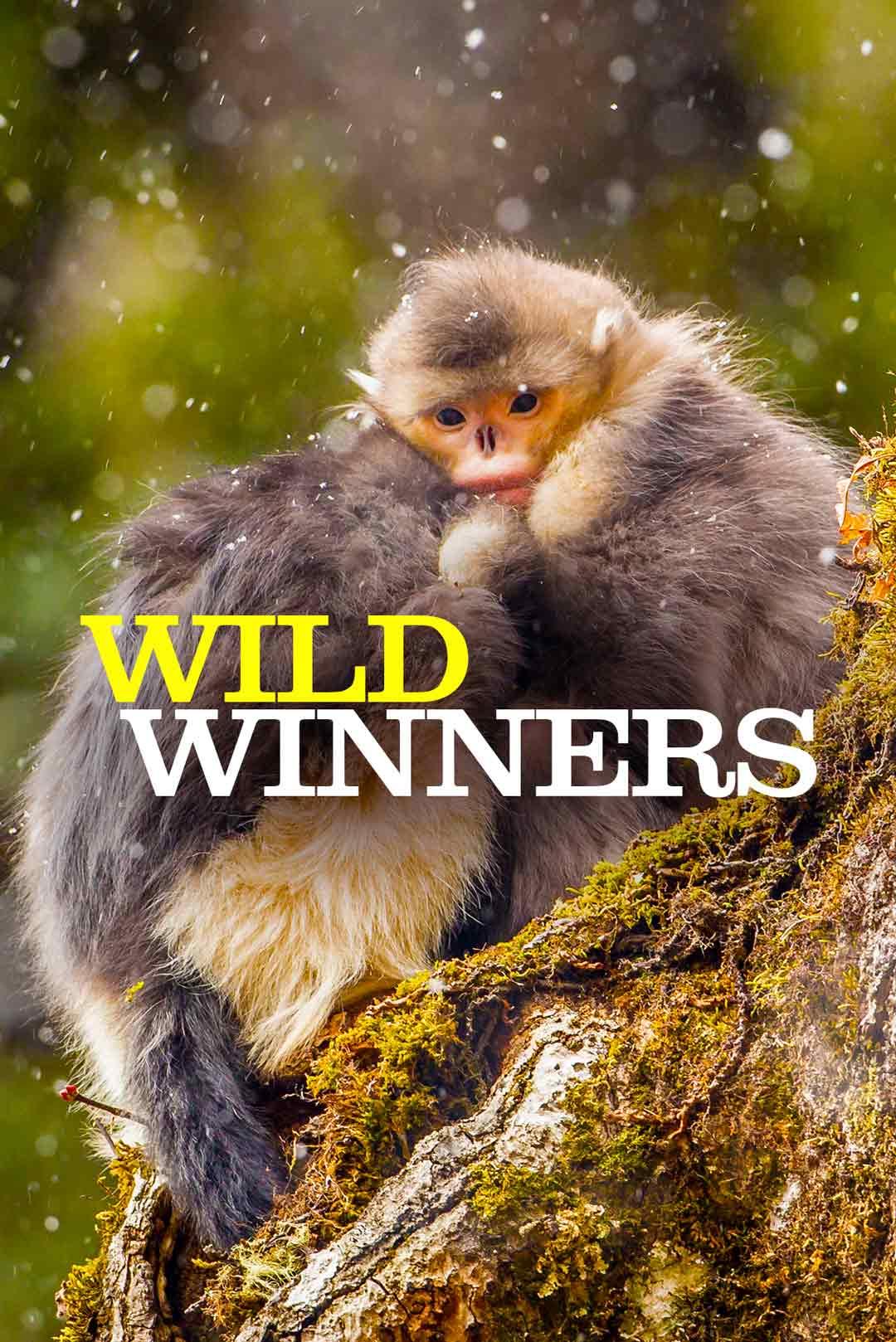 Wild Winners