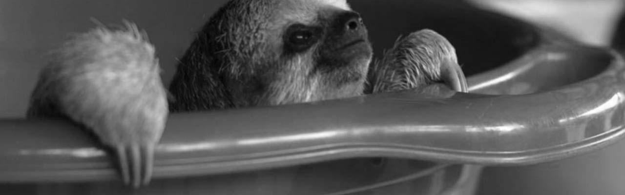 Going Wild: Suriname Sloths