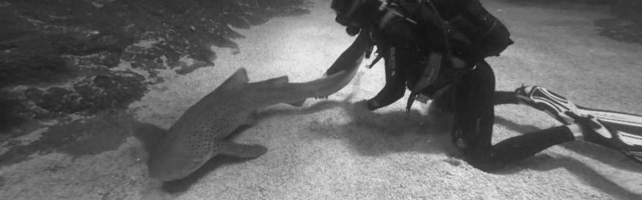 Going Wild: Bosnia and Hercegovina Sharks