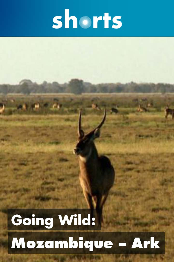 Going Wild: Mozambique Ark