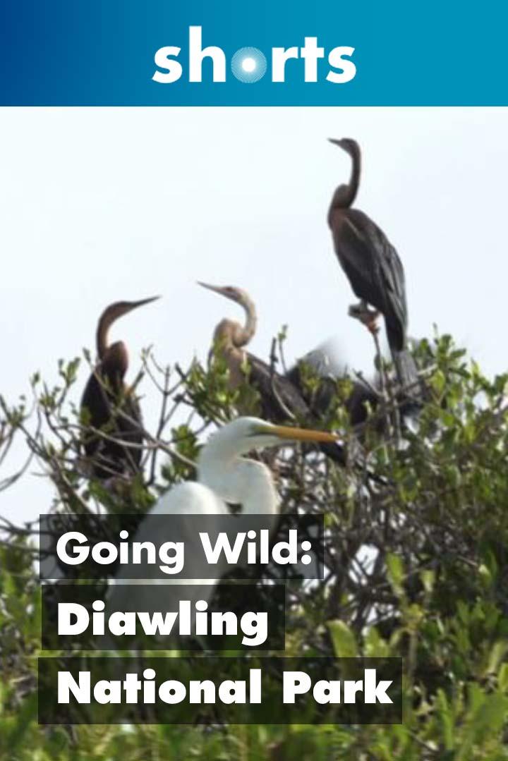 Going Wild: Mauretania Diawling National Park