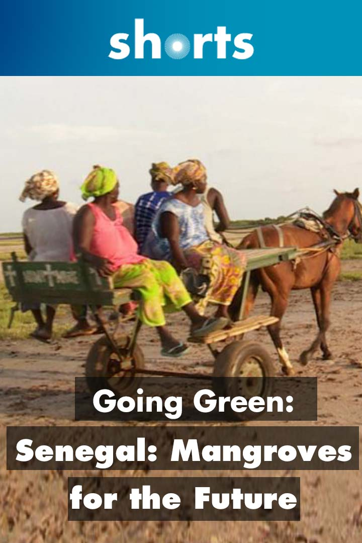 Going Green: Senegal mangroves for the future