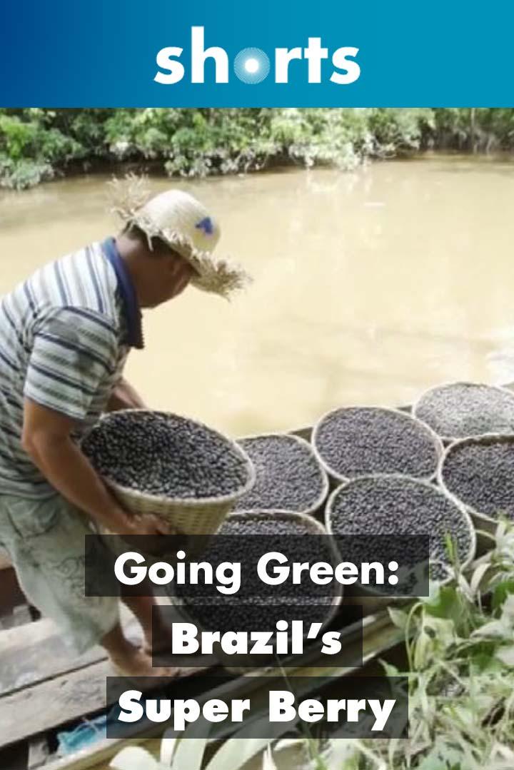 Going Green: Brazil's Super Berry