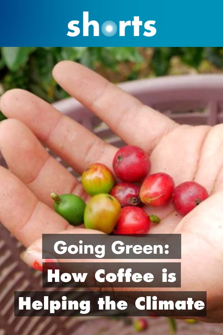 Going Green: Costa Rica How Coffee is Helping the Climate