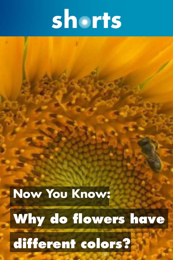 Now You Know: Why do flowers have different colours?